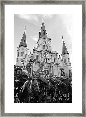 St Louis Cathedral Rising Above Palms Jackson Square French Quarter New Orleans Black And White Framed Print by Shawn O'Brien