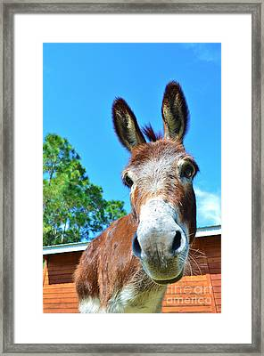 Stable Personality Framed Print by Lynda Dawson-Youngclaus