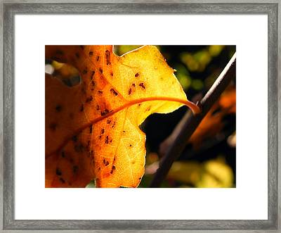 Stained Glass Of Autumn Framed Print by Leah Moore