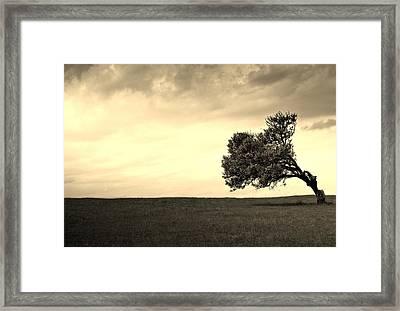Stand Alone Tree 1 Framed Print by Sumit Mehndiratta