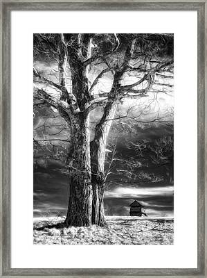 Standing Guard II Framed Print by Dan Carmichael