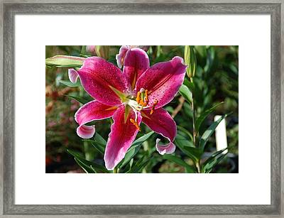 Star Framed Print by Aimee L Maher Photography and Art Visit ALMGallerydotcom