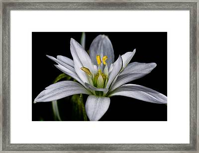 Star Of Bethlehem Framed Print by Lori Coleman