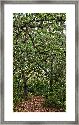 Starkey Woodlands  Framed Print by Gregory Colvin