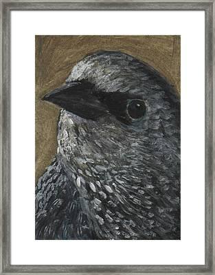 Starling Study Framed Print by Robin Gorton