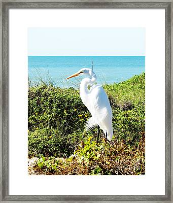Statuesque Heron Vanilla Pop Framed Print by Chris Andruskiewicz