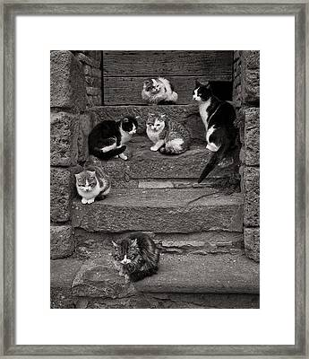 Step Cats Framed Print by Michael Avory