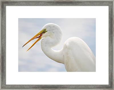 Sticking Out His Tongue Framed Print by Paulette Thomas