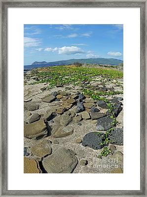 Stones On Sand At Punta Vincente Roca Framed Print by Sami Sarkis