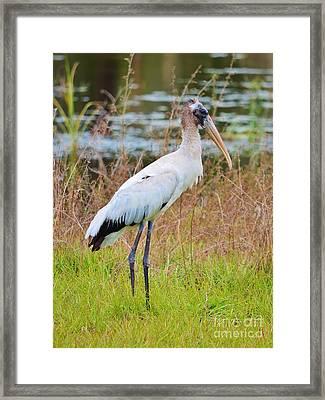 Stork Stand Framed Print by Lynda Dawson-Youngclaus