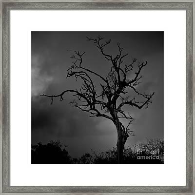 Stormy Tree Framed Print by Kevin Barske