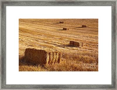 Straw Field Framed Print by Carlos Caetano