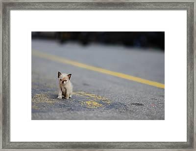 Street Kitten On Road Framed Print by Carlina Teteris