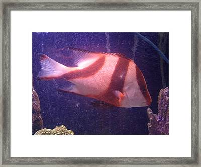 Striped Fish Framed Print by Val Oconnor