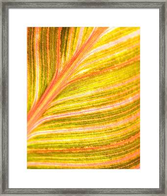 Striped Leaf Framed Print by Bonnie Bruno