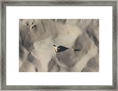 Stuck Framed Print by Sheryl Burns