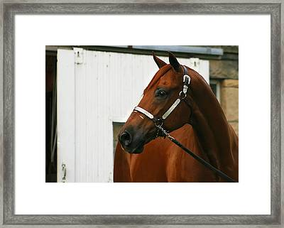 Stud Framed Print by Angela Rath
