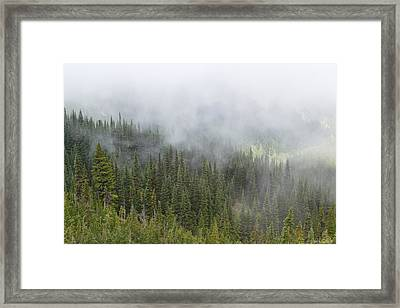 Sublime Beauty Framed Print by Heidi Smith