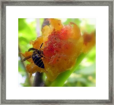 Succulent Fig Framed Print by Karen Wiles