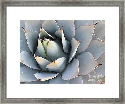 Succulent Framed Print by Tracy L Teeter