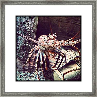 Suddenly, I Want Seafood.... #lobster Framed Print by Kel Hill
