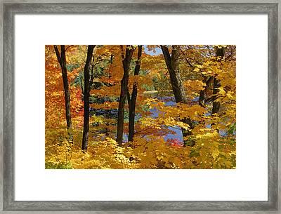 Sugar Maples, Gatineau Park, Quebec Framed Print by Mike Grandmailson