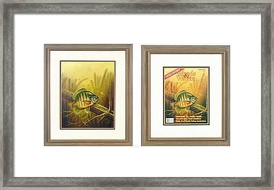 Summer Bluegill Framed Print by JQ Licensing