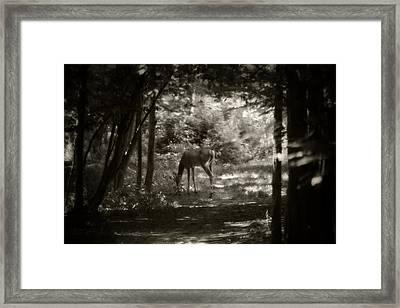 Summer Buck 2 Framed Print by Scott Hovind