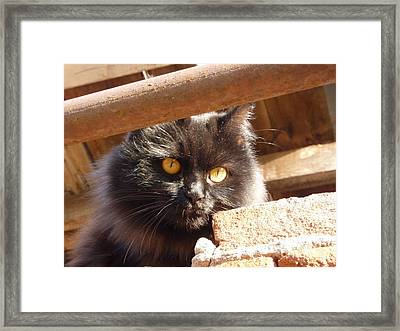 Summer Cat Without A Grin  Framed Print by Alisa Tek