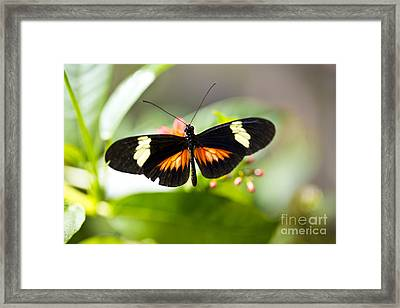 Summer Love Framed Print by Leslie Leda