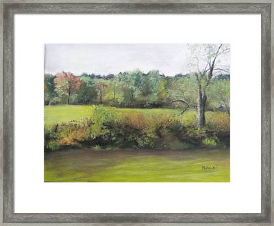 Summer Meadow Framed Print by Cindy Plutnicki