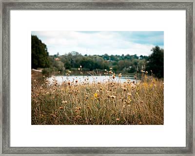 Summer Noon Framed Print by Sasha Gurkova