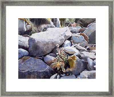 Summer Streambed Framed Print by Sharon Freeman