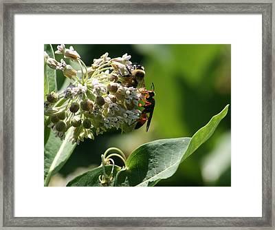 Summer Time Framed Print by Valia Bradshaw