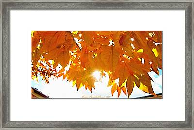 Sun Kissed  Deciduous Framed Print by Danielle  Parent