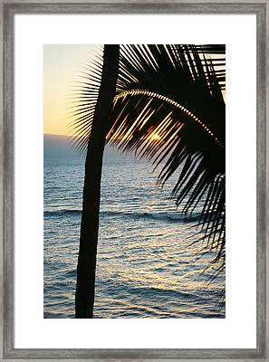 Sun Setting Behind The Palm Framed Print by Marilyn Hunt