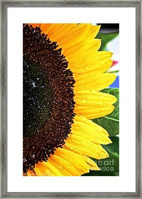 Sun Sparkles Framed Print by Susan Herber
