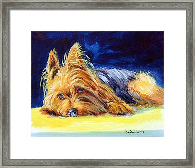 Sun Spot Yorkshire Terrier Framed Print by Lyn Cook