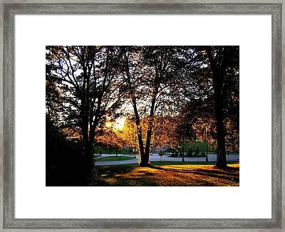 Sundown In Stanley Park Framed Print by Will Borden