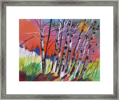 Sundown White Birches Framed Print by John  Williams