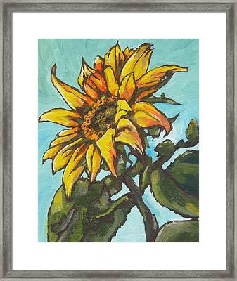 Sunflower 1 Framed Print by Sandy Tracey