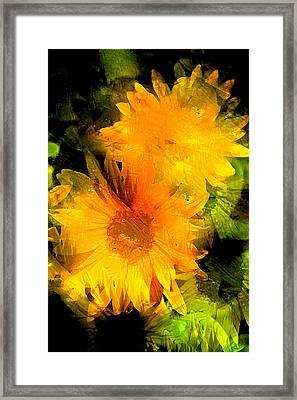 Sunflower 2 Framed Print by Pamela Cooper