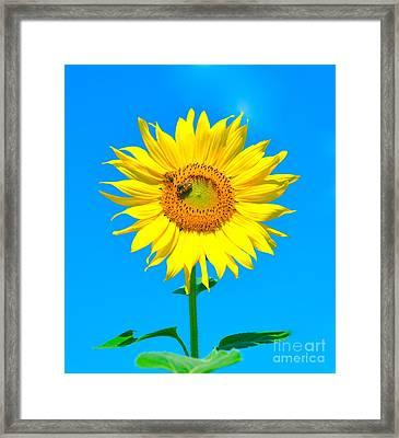 Sunflower And Bee Framed Print by Debbi Granruth