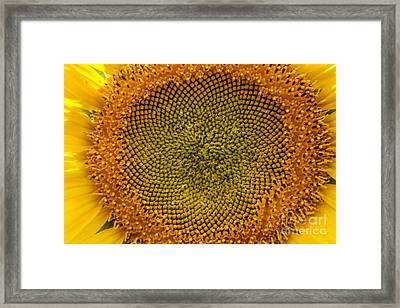Sunflower Center Framed Print by Darleen Stry