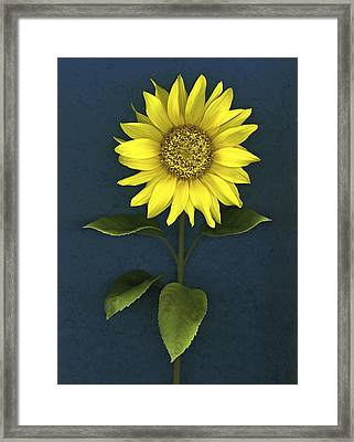 Sunflower Framed Print by Deddeda