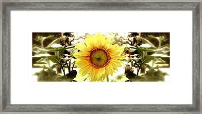 Sunflower Framed Print by Photography Art