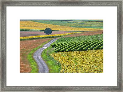 Sunflower Field And Road Framed Print by Peter Smith Images