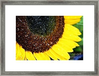 Sunflower Glitter Framed Print by Susan Herber