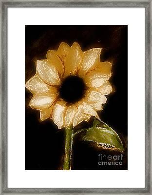 Sunflower Glory Framed Print by Marsha Heiken