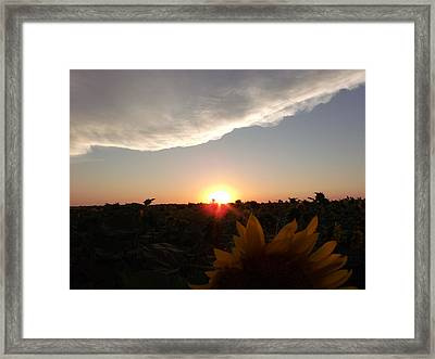 Sunflower Sunset Framed Print by Brian  Maloney
